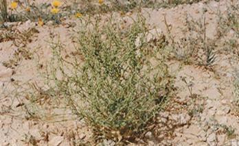 موسوعة نباتات الصحراء