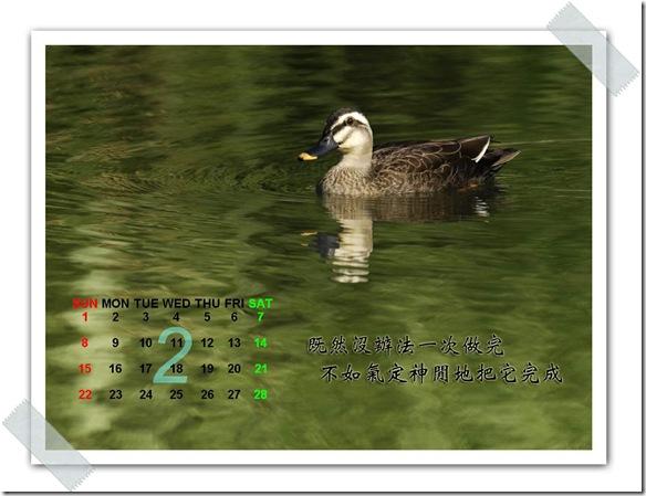 2月  花嘴鴨(攝於  花蓮國福)