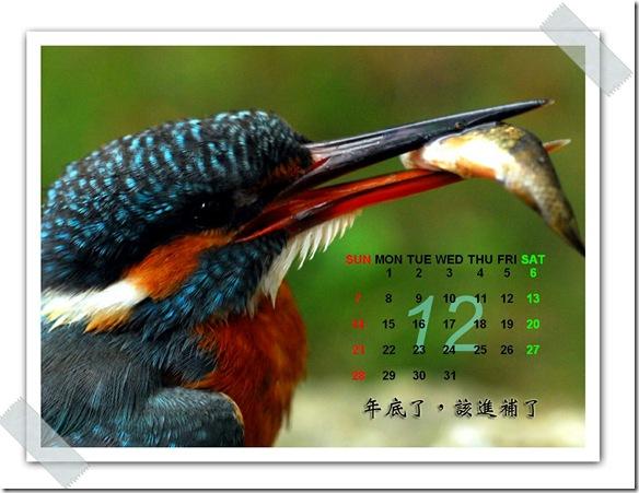 12月  翠鳥(攝於  花蓮吉安)