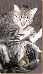 Smitten Kitten & Fizgig girl