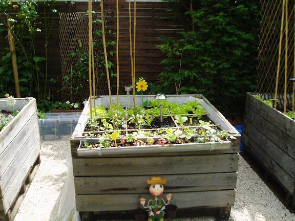 dans jardin potager en carré