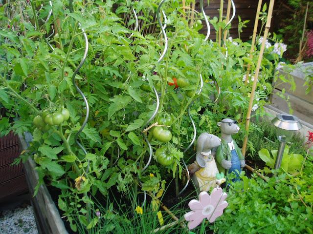 de nouveau parmi vous  dans jardin potager en carré