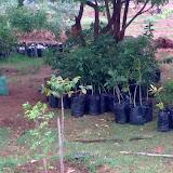 Plantation time in ODAM Farm