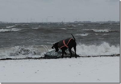 Treibgut am Strand von Heiligenhafen, H. Brune