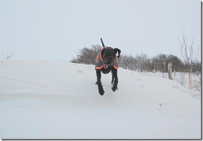 Zorro auf hoher Schneewehe, H. Brune