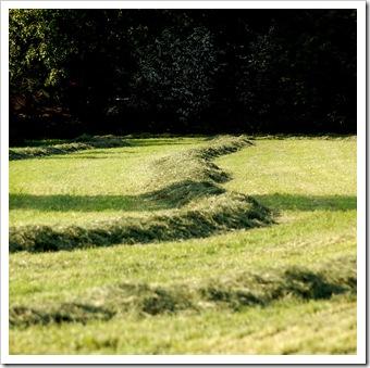 Grasschwade © H. Brune