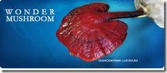 generic_red_mushroom (ganoderma_lucidum)