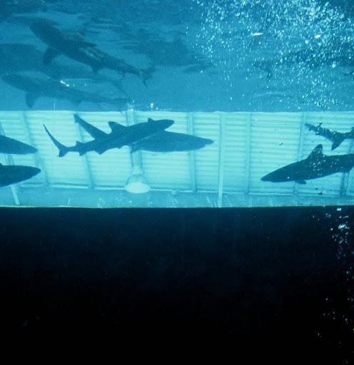 shark tank in Manila Ocean Park