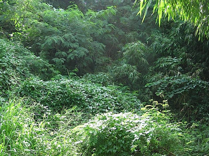 stand of woods in Ateneo de Manila