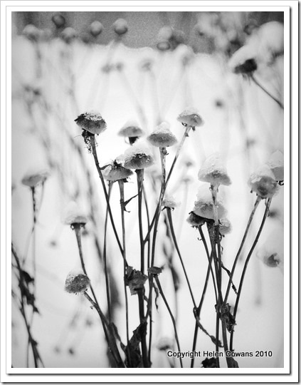 plants B&W_thumb[1]