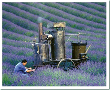 l&#39;occitane lavender