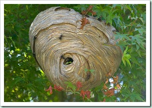 hornets nest