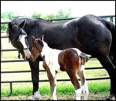 IMG_Jolie & foal 5-8-10 (E)