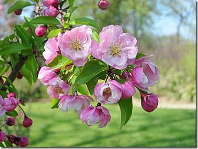 spring_bloom
