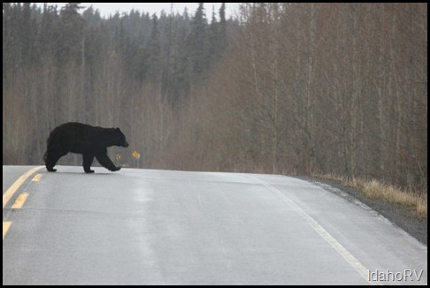 Third-Bear-Sighting
