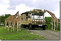 pic_serengeti_park