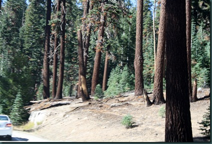To California via Yosemite 148