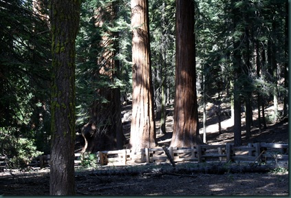 Sequoia National Park 158