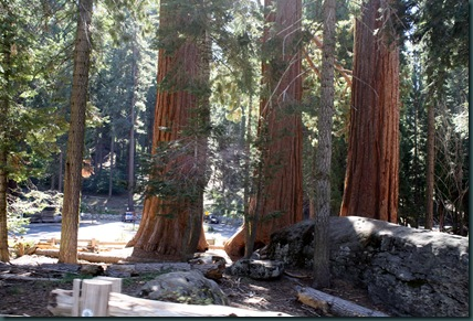 Sequoia National Park 110