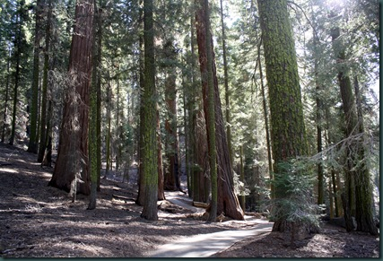 Sequoia National Park 249