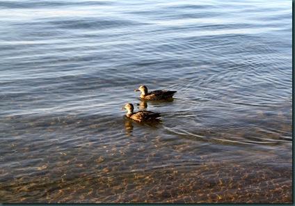 LAKE TAHOE 092