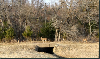 Deer and Jana Snow Ball 013