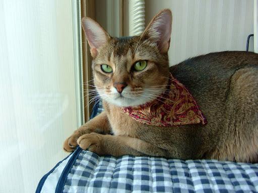 살찐 고양이 바토 [고양이,고양이키우기,고양이집사,반려묘,cat]