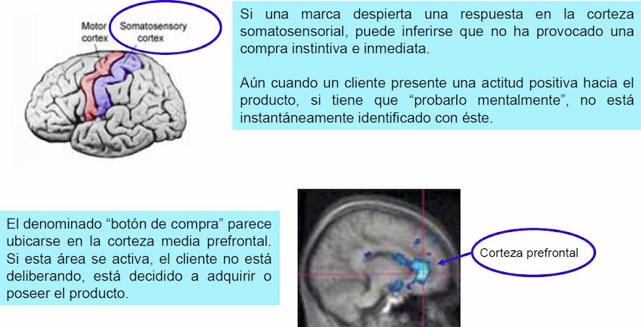 Las neurociencias como oportunidad estratégica para el área comercial