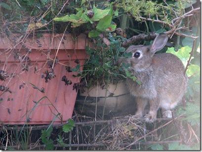20090824 Wbx & rabbit2