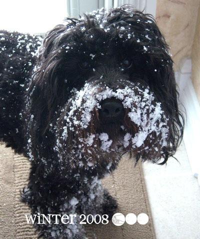 snow-gus