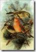 thumb_Parrot_Crossbill