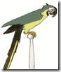 thumb_parrot