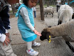 子羊さん ごはんをどうぞ
