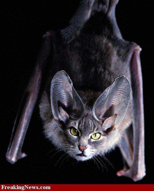 funny bat photoshop