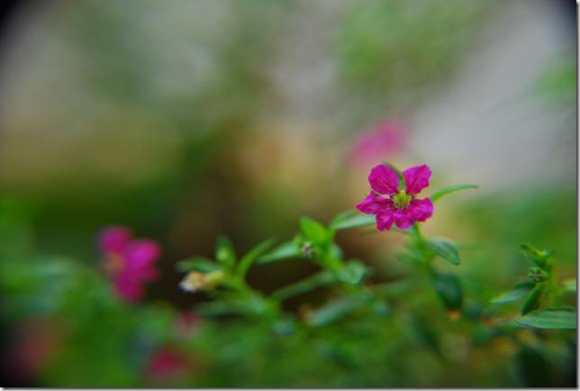 Bunga sekuntum~