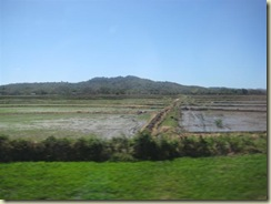 Rice field S J D S (Small)