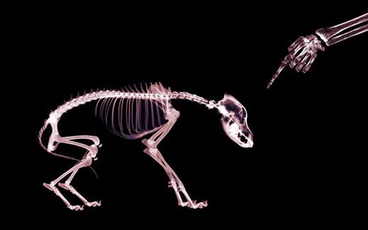 (31)HD-X-Ray-View-Desktop-Wallpaper-pet
