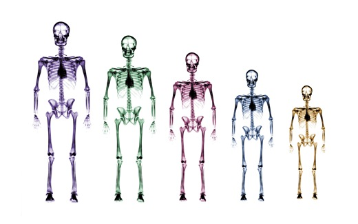 (34)HD-X-Ray-View-Desktop-Wallpaper-generation