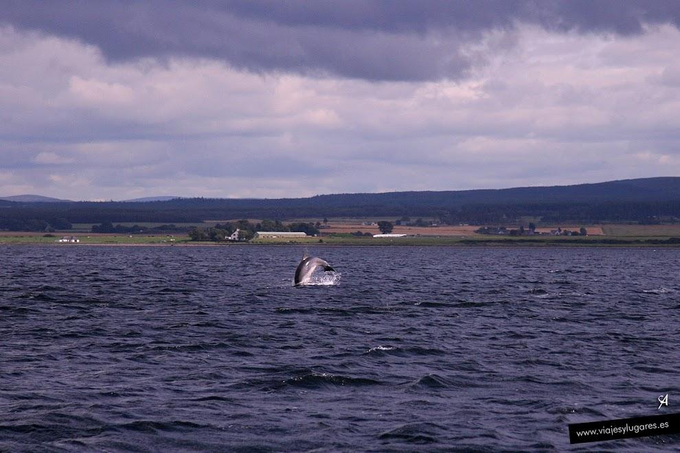 Delfines en Inverness