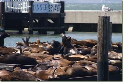 03 - Op Fishermans Warf liggen de zeeleeuwen luidruchtig te wezen