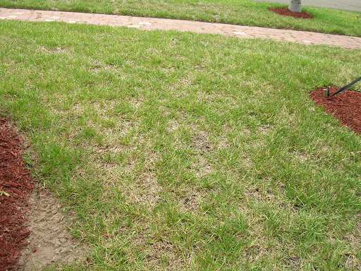 dead lawn burned out lawn organic lawncare