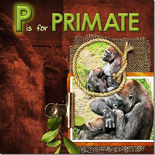 P is for Primate