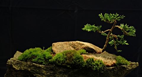 katajasaari