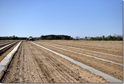 transplanting watermelons 0311 (50)
