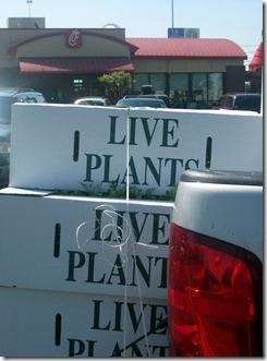 plant pickup 0311 (16)