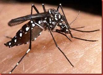 mosquito-picada.jpg