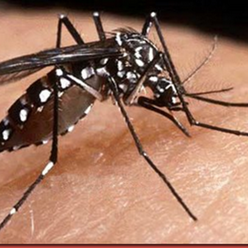 Armadilha para o mosquito da dengue