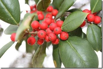 berries 031