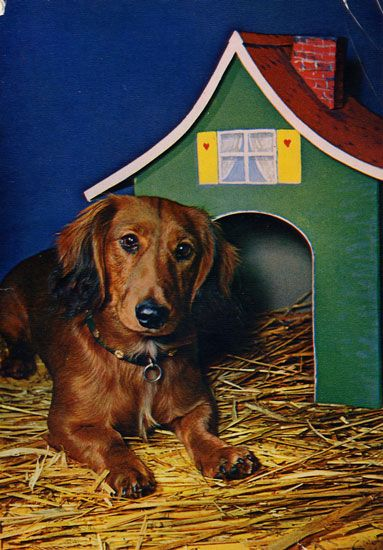 Cartes Postales Pop et  Kitsch des annes 50, 70 et 70 Dachshund : Musician or porn star ? - Teckels cruels