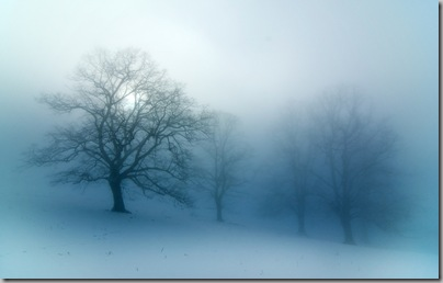 fog winter